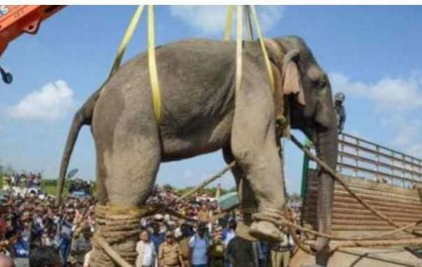 6 days after its capture, elephant dies at Assam training facility